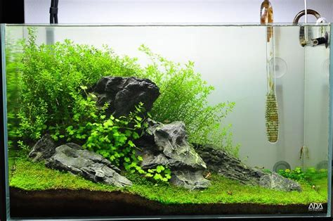 fluval spec aquascape upgraded fluval spec v first high tech tank watch me
