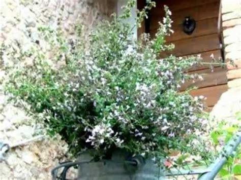 il giardino delle api la sugarella in terra di siena italia quot il giardino