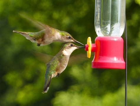hummingbirds 187 bird watcher s digest