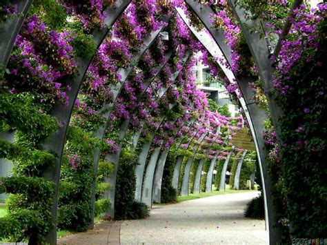 flower tunnel flower tunnel wallpaper 33417 open walls