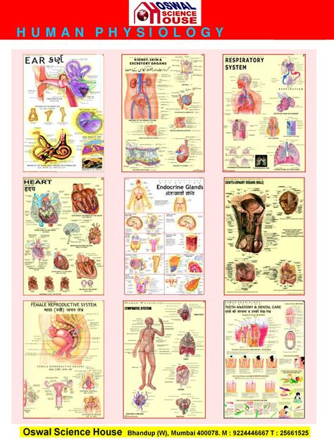 Human Physiology by Oswal Science House Human Physiology