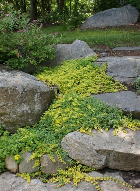 backyard ground cover ground cover outdoor ground cover pinterest