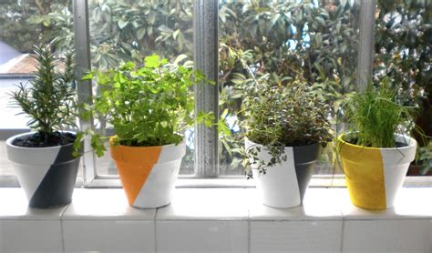 herbs indoors emerald and may diy how to grow herbs indoors