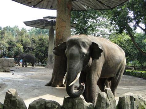 Lu Taman Delman pernah ke ragunan kebun binatang itu loh liburkeluarga