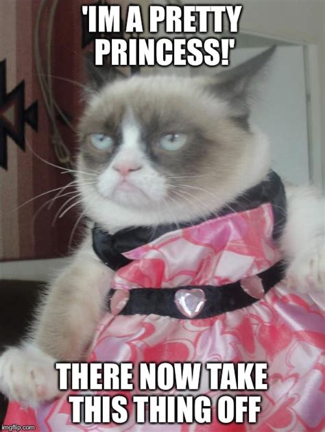 Dress Meme - grumpy cat in a dress imgflip