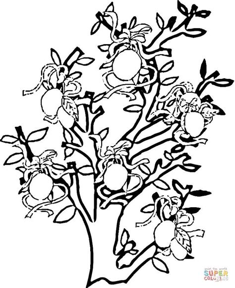 Lemon Tree Coloring Page | coloriage citrons sur citronnier coloriages 224 imprimer