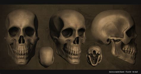 Skull L by L Ecorche The Skull Compositing By L0to On Deviantart