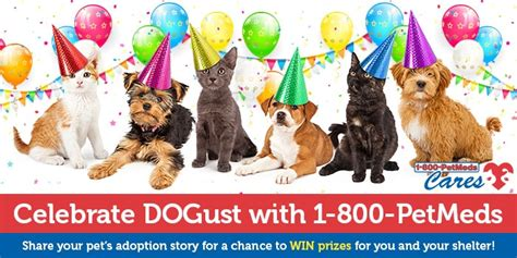 North Shore Animal League America Sweepstakes - celebrate dogust with 1 800 petmeds 1 800 petmeds cares