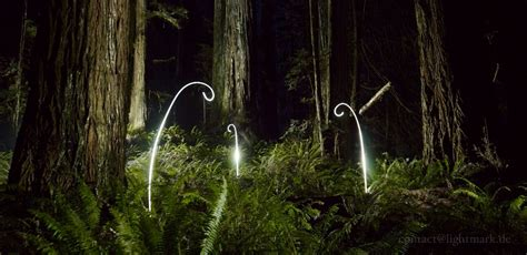 paint nite monterey light painting and landscape photography costal redwoods