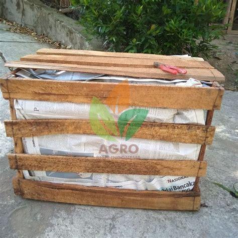 Bibit Alpukat Sambung jual bibit alpukat lokal untuk sambung agro bibit id