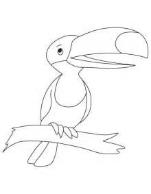 pics photos toucan coloring