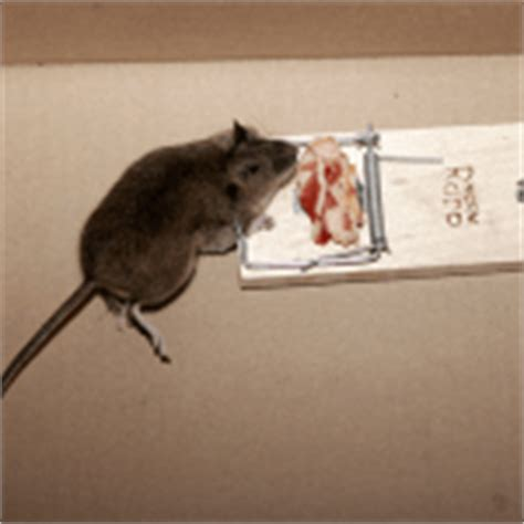 How To Get Rid Of Field Mice In Garage by How To Get Rid Of Squirrels How To Get Rid Of Stuff