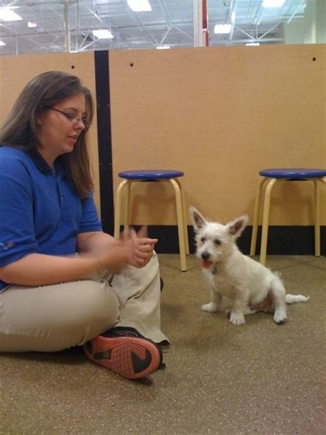 petsmart puppy class about from prestonspeaks prestonspeaks