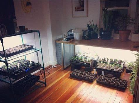 grow light shelf set   seed starting indoors grow