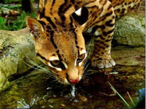 amazon rainforest animals amazon rainforest holidays tours holidays in amazon