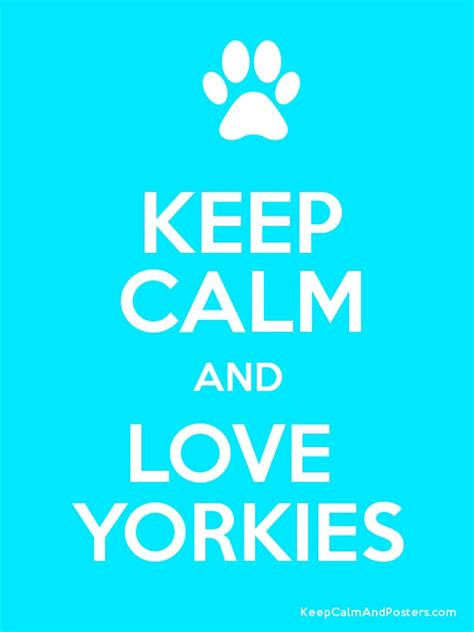 when do yorkie puppies calm keep calm and yorkies poster