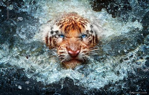 best wildlife photography best wildlife photography 9 preview
