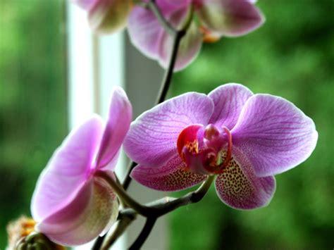 Supérieur Orchidee Jardin Des Plantes #5: orchidee-164216.jpg