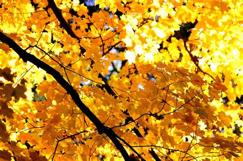 libreria le foglie d oro le foglie d oro di betelgeuse pagina tre