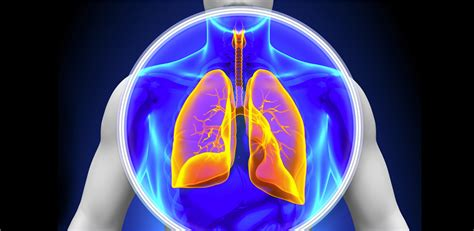 Cctv Lung Lung Nodule Surveillance Your Next Steps After Lung Cancer Screening Roswell Park Cancer Institute
