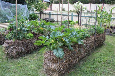 Straw Bale Gardening by Guest Post Straw Bale Gardening By Tracey Sidwell From