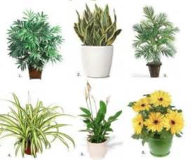 best inside plants natural healing tools top 10 air purifying house plants