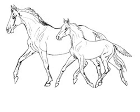 breyer horse coloring page breyer horse coloring contest coloring pages