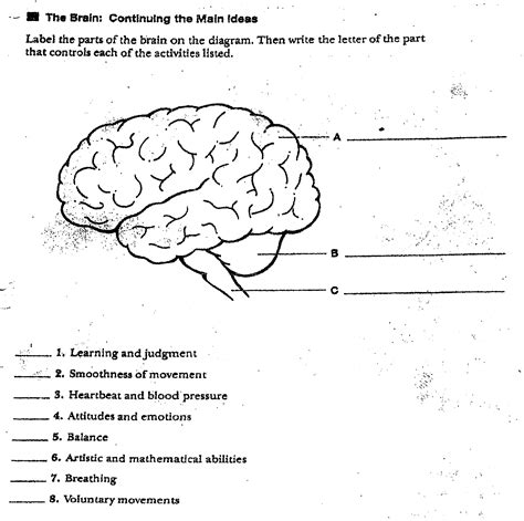 46 parts of the brain worksheet human brain clipart