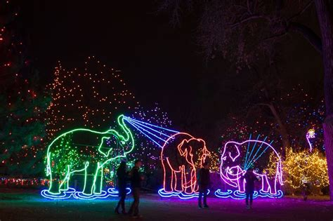 premier traditions christmas lights zoo lights 2017 preview weekend pulp colorado