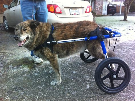 wheels for dogs wheels for rear legs wheelchairs carts handicapped pets canada