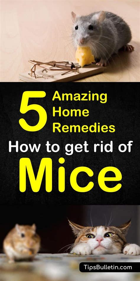 Five Tips On How To Get Rid Of Eye Circles And Puffiness by Home Remedies To Get Rid Of Mice Grandmas Tips How To Get