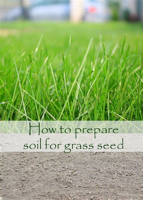 Growing Grass From Seed by 25 Beautiful Growing Grass From Seed Ideas On