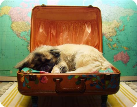 suitcase dog bed the 25 best suitcase dog beds ideas on pinterest doggie