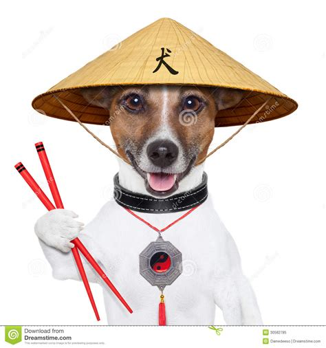 asian dogs asian royalty free stock photo image 30582785