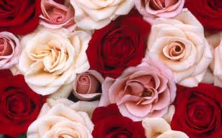 Pink And Red Roses Pink And Red Roses Background Daily Pics Update Hd Wallpapers Download