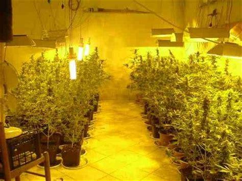coltivazione indoor armadio coltivazione indoor di arrestato 30enne nel