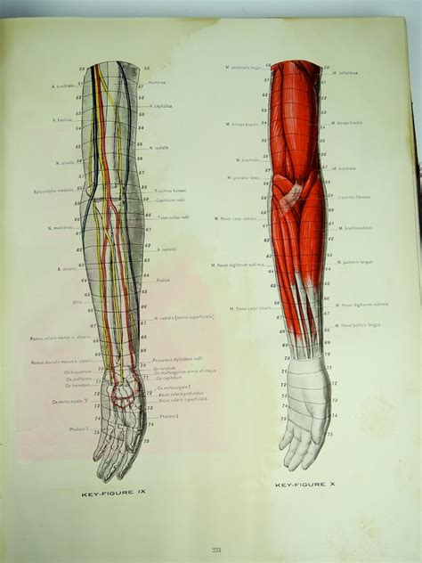 c section book antique 1911 cross section anatomy book