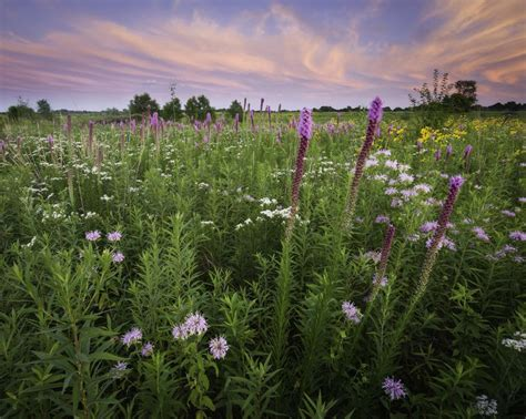 flowering prairie plants books to save bees city plans 1 000 acres of prairie mnn