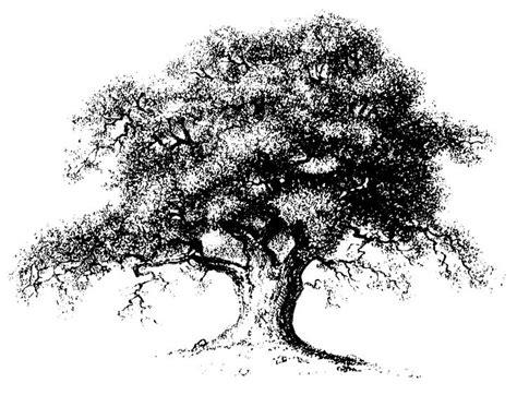 oak tree drawing 15 best oak tree symbols images on pinterest oak tree