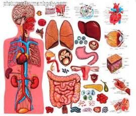 Body organs organ human organs internal organs human body