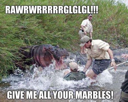 Hippo Meme - tgif humor friday s a basket case pmslweb