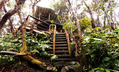 treehouse vacations these 10 awesome airbnb treehouses are yours to rent this summer