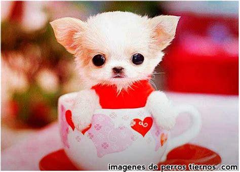imagenes para fondo de pantalla tiernas as 237 act 250 an los perritos amorosos im 225 genes imagenes de