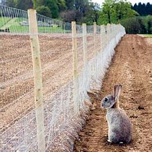 how to keep rabbits out of your backyard how to keep rabbits out of garden 4 humane ways to keep rabbits out of the garden