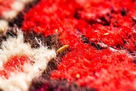 tarme tappeti come curare il tappeto da tarme acari e macchie di varia