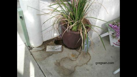 floor protectors for plants over watering potted plants can lead to stains in concrete