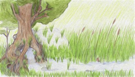 drawing themes on nature tree spring nature drawings pictures drawings ideas
