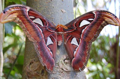 Big Butterfly big butterfly by fox boy456 on deviantart