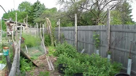 permaculture backyard tour my dazzling permaculture backyard youtube