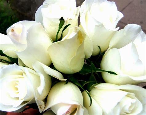imagenes de gladiolas blancas flores y 193 rboles